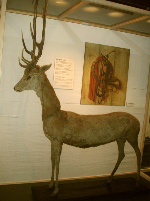 The Oldest Stag In The World