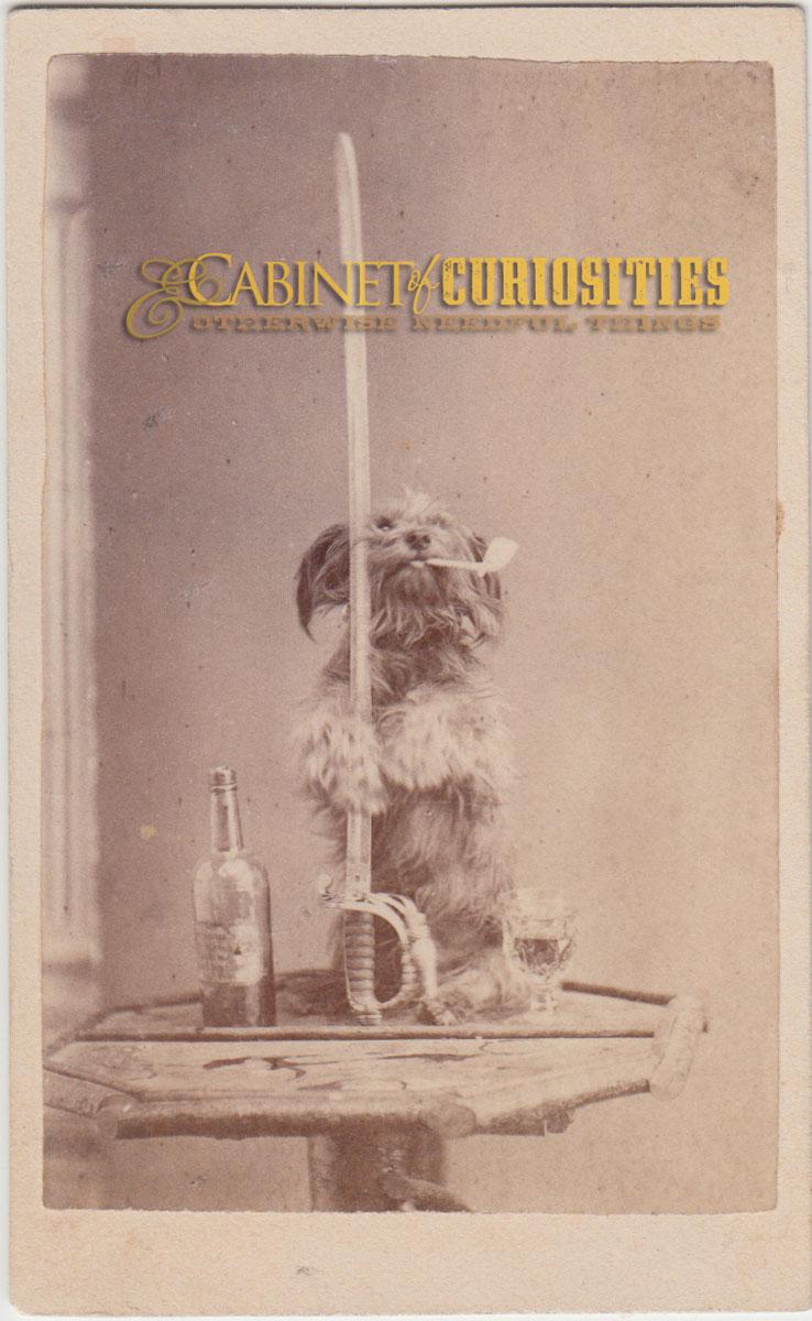 Posing Pup Photo