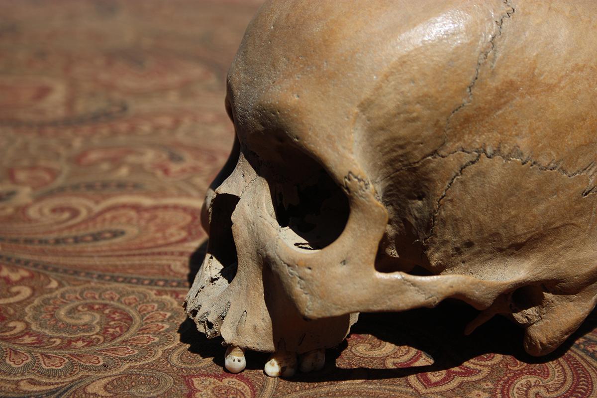 18 Century Human Skull